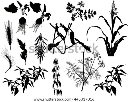illustration with set of agricultural plants silhouettes isolated on white background