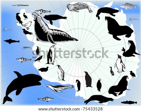 illustration with set of antarctic animals and birds - stock vector