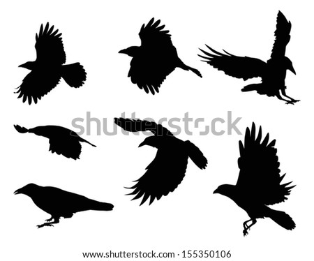 illustration with set of eight crow silhouettes isolated on white background