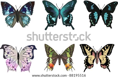illustration with six different butterflies isolated on white background - stock vector