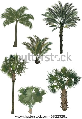 illustration with six palm trees isolated on white background - stock vector
