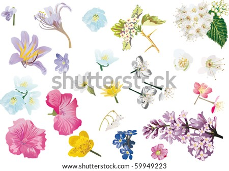 illustration with spring flowers collection isolated on white background - stock vector