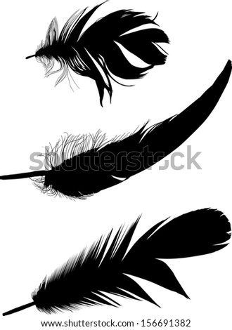 illustration with three black feathers on white background