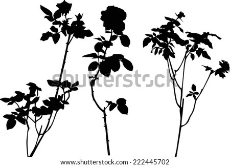 illustration with three black rose flowers isolated on white background