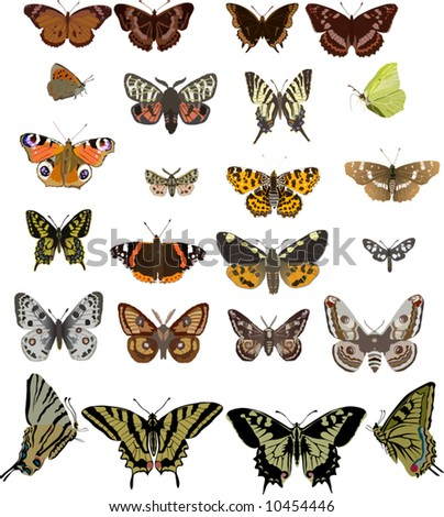 illustration with twenty four different butterflies isolated on white background