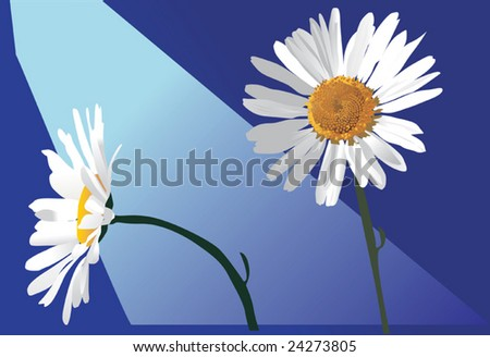 illustration with two chamomiles flowers on blue background