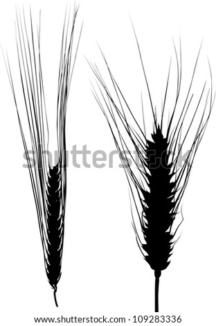 illustration with two ear silhouettes isolated on white background - stock vector