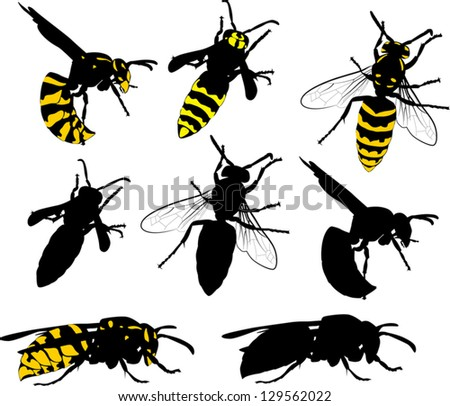 illustration with wasps collection isolated on white background - stock vector