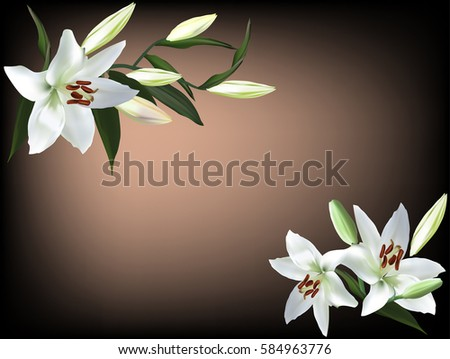 illustration with white lily flowers on brown background