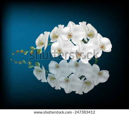illustration with white orchid on dark blue background - stock vector