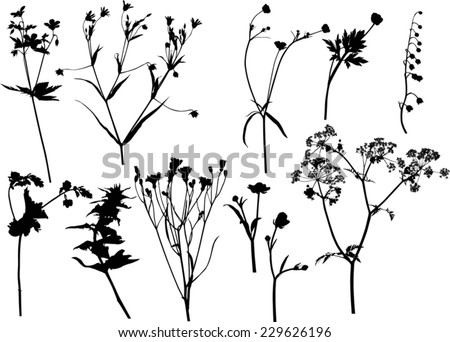 illustration with wild flowers silhouettes isolated on white - stock vector