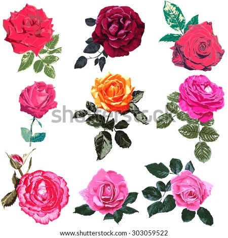 Illustrations of red roses, hand-painted red roses in full bloom, Mexico rose, Isolated on white background. - stock vector
