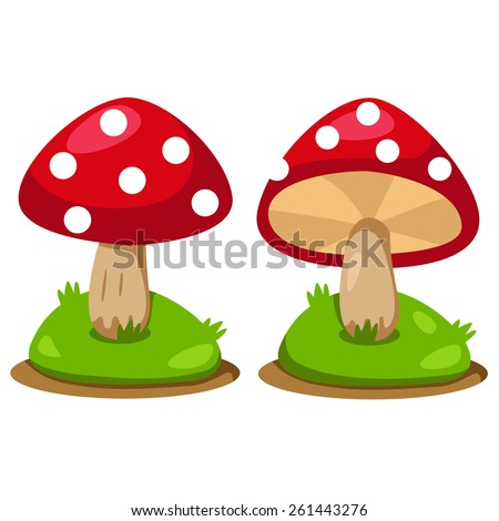 Illustrator of mushrooms - stock vector