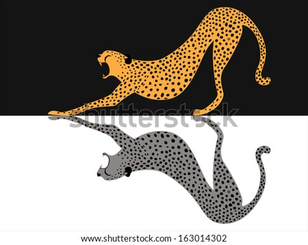 image graphic style of Cheetah tiger isolated on white background