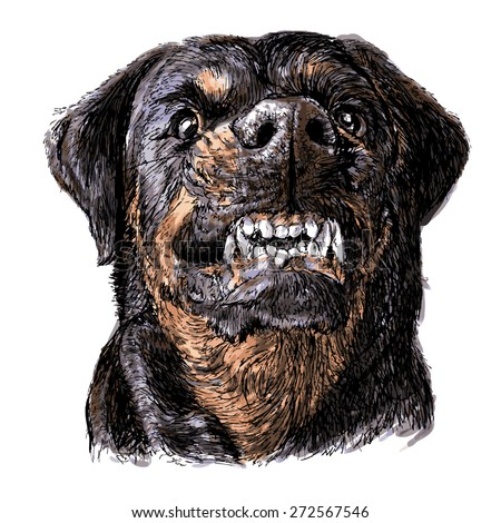 Angry rottweiler dog - photo#41