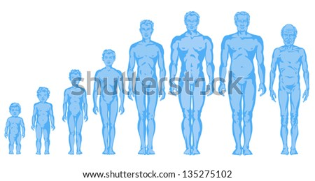 human body anatomy vector medical organs stock vector 299488103, Muscles