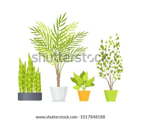 Indoor Floor Plants Lush Foliage Long Stock Vector 1017848188 ...
