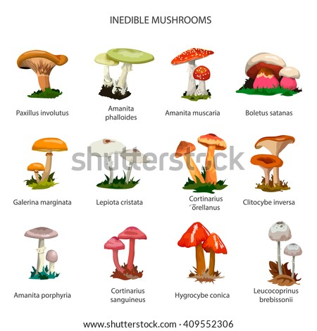 Inedible mushrooms vector set of icons isolated on white background. Different types of mushrooms. - stock vector