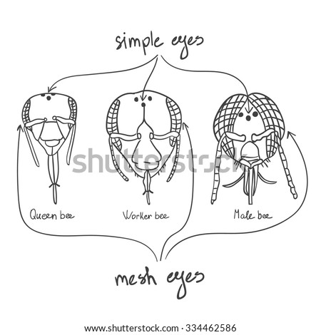 parts saddle bridle vector terms equestrian stock vector
