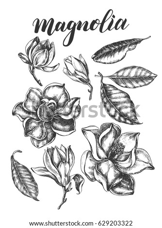 Ink hand drawn set of magnolia flowers and leaves. Botanical elements collection for design, Vector illustration.