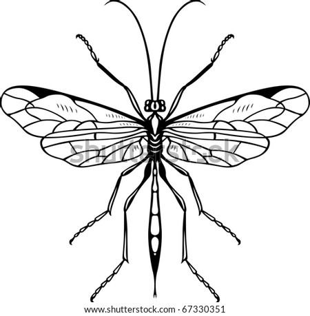 Insect - stock vector
