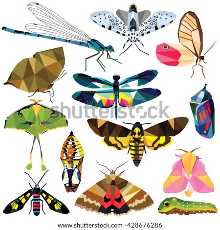 Insect set colorful low poly butterfly, moth, caterpillar, chrysalis, dragonfly designs isolated on white background. Vector collection of animal insects in a modern style illustration.