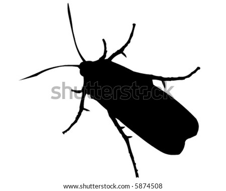 Insect vector - stock vector