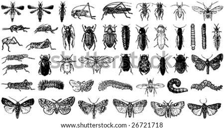 insect vector collection a - stock vector