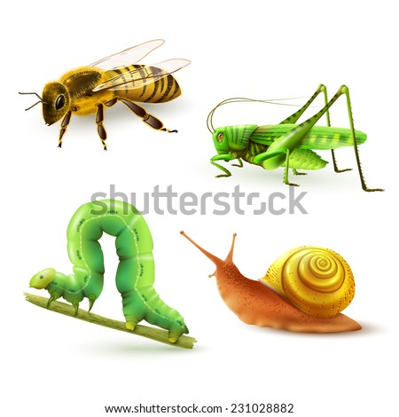 Insects realistic colored decorative icons set with wasp grasshopper caterpillar snail isolated vector illustration - stock vector