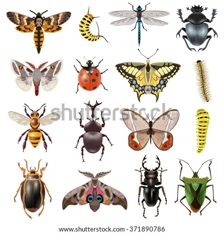Insects realistic icons set with butterfly and beetles isolated vector illustration  - stock vector