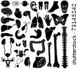 Internal organs, vector illustration, eps10 - stock photo