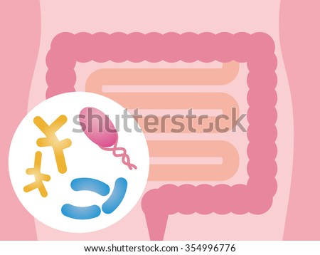 Intestinal flora, Gut flora, enteric bacteria, image illustration - stock vector