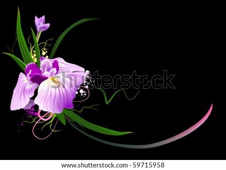Iris - stock vector