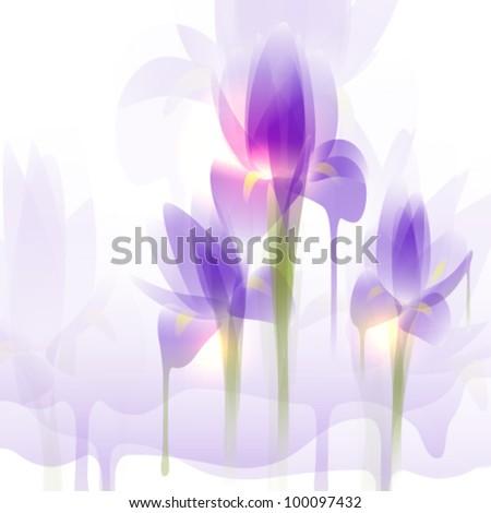 Iris flowers, vector illustration - stock vector