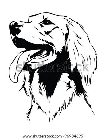 Irish setter dog head - vector illustration - stock vector