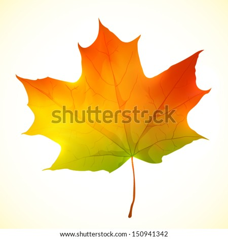 Isolated autumn bright vector maple leaf - stock vector