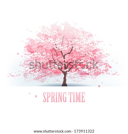 Isolated beautiful cherry blossom tree.