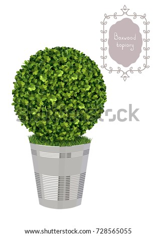 Isolated Boxwood Topiary Metal Flower Pot Stock Photo (Photo, Vector on magnolia garden, english laurel garden, english rose garden, pink and white landscape garden, lilac garden, hydrangea garden, iris garden, english garden landscape design ideas, english heather garden, carnations garden, camellia garden, flower border around vegetable garden, english lavender garden, english ivy garden, gardenia garden,