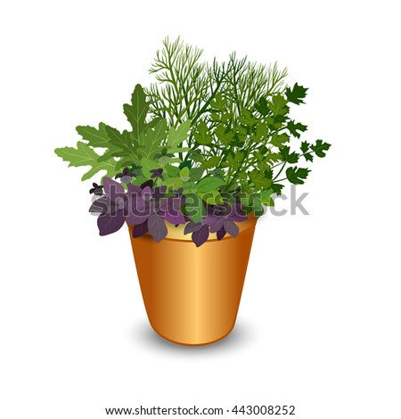 Isolated different herbs in a pot: bay leaves, arugula,basil,parsley and dill. Kitchen herbs on a white background, vector illustration. - stock vector