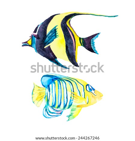 Isolated fish. Tropical fish on a white background. - stock vector