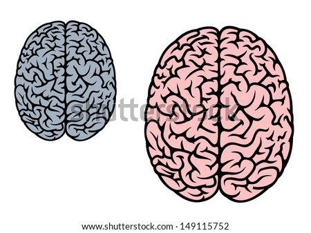 Isolated human brain in red and gray colors for medicine design or idea of logo. Jpeg version also available in gallery - stock vector