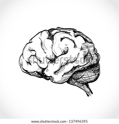 brain line drawing top - photo #49