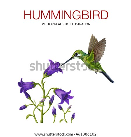 Isolated Hummingbird on white background. Vector illustration made in a realistic style