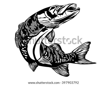 Isolated illustration of big pike fish. Vector illustration can be used for creating logo and emblem for fishing clubs, prints, web and other crafts.