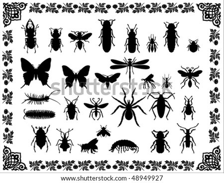 Isolated insects in the beautiful frame