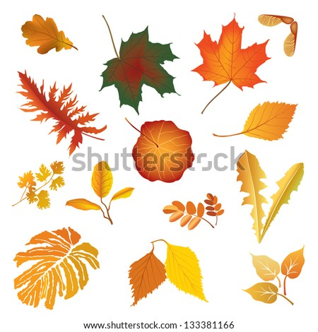 Isolated leaves vector set. autumn nature decor. - stock vector