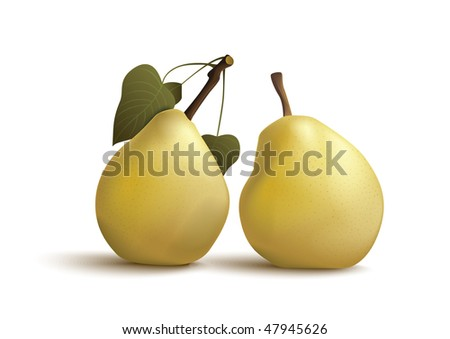 isolated pears - stock vector
