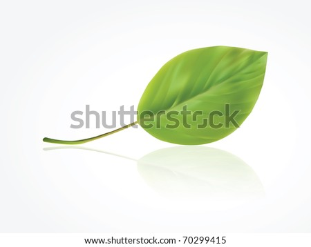 Isolated photorealistic green leaf - stock vector