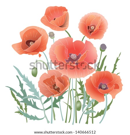 Isolated red poppies. Red flowers and leaves. Vector illustration - stock vector