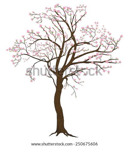 Isolated sakura spring blooming tree with flowers illustration with detailed drawing bark - stock vector